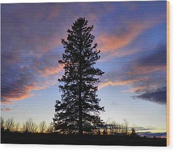 Giant Spruce Tree Sunset Wood Print by Gene Cyr