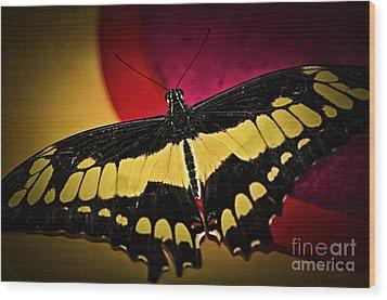 Giant Swallowtail Butterfly Wood Print by Elena Elisseeva