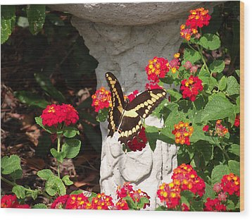 Wood Print featuring the photograph Giant Swallowtail On Lantana by Jayne Wilson