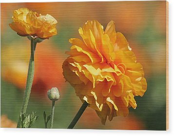Giant Tecolote Ranunculus - Carlsbad Flower Fields Ca Wood Print by Christine Till