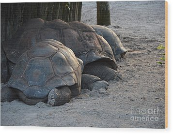 Wood Print featuring the photograph Giant Tortise by Robert Meanor