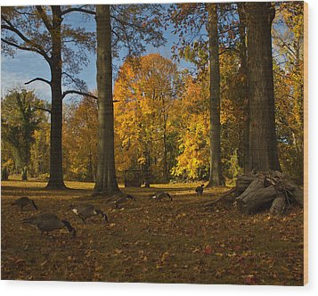 Giant Trees And Ducks Feeding Wood Print