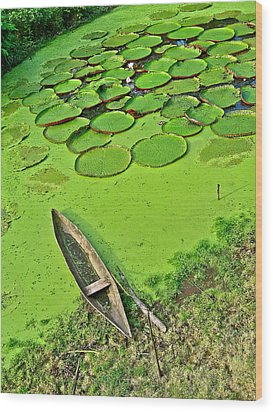 Giant Water Lilies And A Dugout Canoe In Amazon Jungle-peru Wood Print