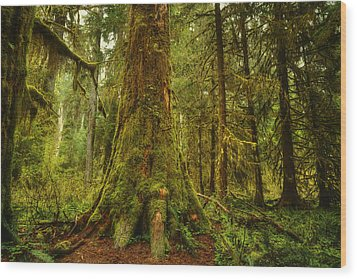 Giants Foot Wood Print by Stuart Deacon