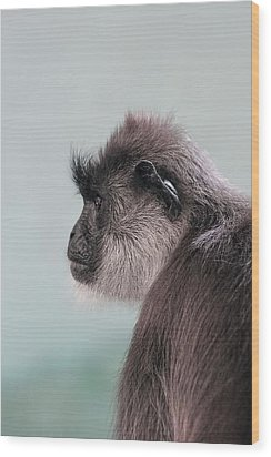 Wood Print featuring the photograph Gibbon Monkey Profile Portrait by Tracie Kaska