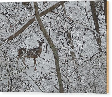 Gift In The Woods Wood Print by Diannah Lynch