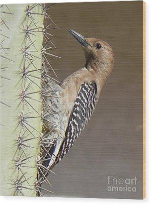 Wood Print featuring the photograph Gila Woodpecker by Deb Halloran