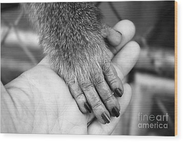 Gimme Five Wood Print by Michelle Meenawong