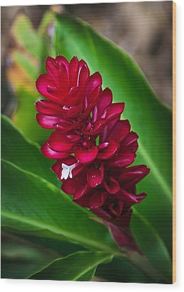 Ginger Flower Wood Print