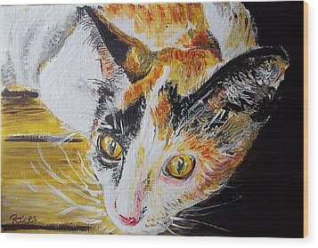 Ginger Stray Cat Wood Print