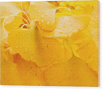 Wood Print featuring the photograph Ginkgo Biloba Leaves by Vizual Studio