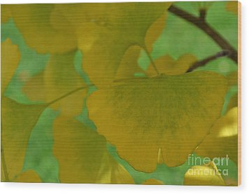 Ginkgo Leaves Abstract Wood Print
