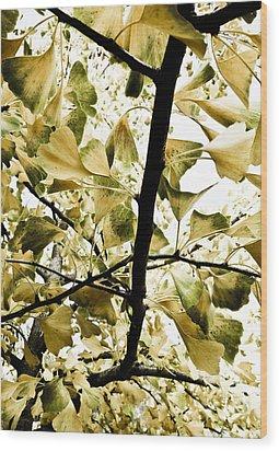 Ginkgo Leaves Wood Print by Frank Tschakert