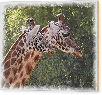 Giraffe 03 Wood Print by Paul Gulliver