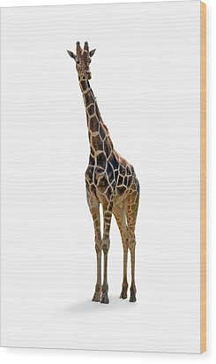Wood Print featuring the photograph Giraffe by Charles Beeler