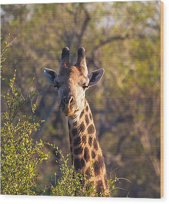 Giraffe Wood Print by Craig Brown