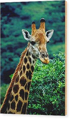 Wood Print featuring the photograph Giraffe by Dennis Cox WorldViews