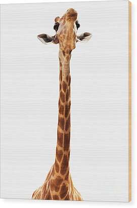 Giraffe Head Isolate On White Wood Print by Mythja  Photography