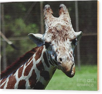 Wood Print featuring the photograph Giraffe Looking by Tom Brickhouse