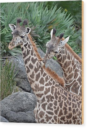 Giraffe Massage Wood Print