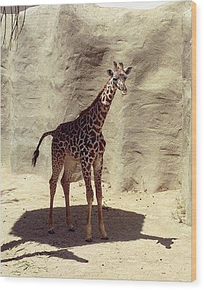 Wood Print featuring the photograph Giraffe by Philomena Zito