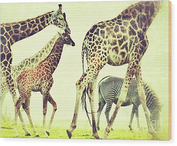 Wood Print featuring the photograph Giraffes And A Zebra In The Mist by Nick  Biemans