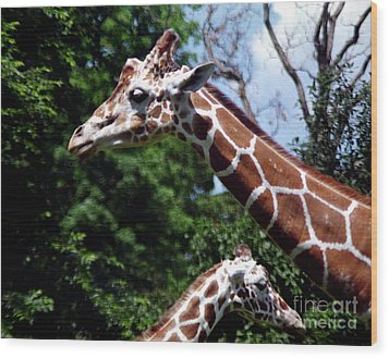 Wood Print featuring the photograph Giraffes Coming And Going by Tom Brickhouse
