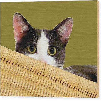 Wood Print featuring the photograph Girlie Cat  by Janette Boyd