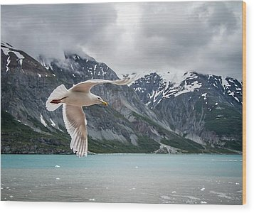 Glacier Bay Flyby Wood Print by Randy Turnbow