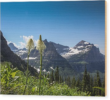 Glacier Grass Wood Print