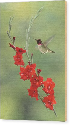 Glad Hummingbird Wood Print by Angie Vogel