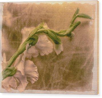 Gladiola Wood Print by Jill Balsam