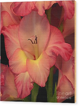 Gladiolus  Wood Print by Annlynn Ward