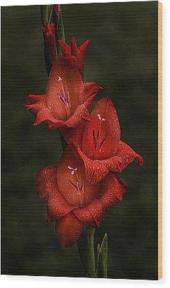 Gladiolus II  Trio Wood Print