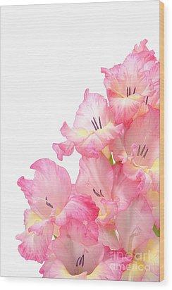 Gladiolus Wood Print by Olivier Le Queinec