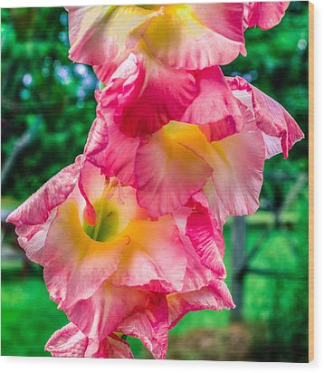 Wood Print featuring the photograph Gladiolus by Rob Sellers