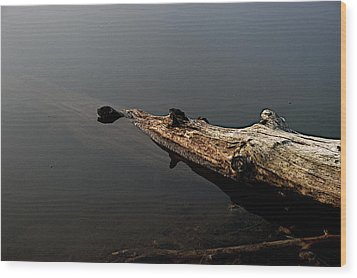 Glen's Log Wood Print by Joseph Yarbrough