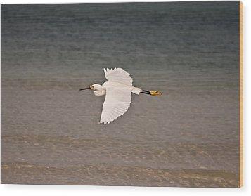 Gliding Bird Wood Print by Paulina Szajek