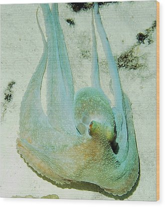 Wood Print featuring the photograph Gliding Reef Octopus by Amy McDaniel