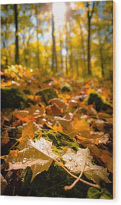 Wood Print featuring the photograph Glistening Autumn Dew by Mark David Zahn