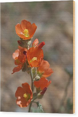 Globemallow Wood Print