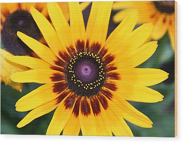 Gloriosa Daisy Wood Print by Denyse Duhaime