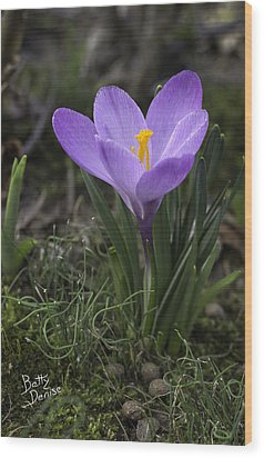 Wood Print featuring the photograph Glorious Crocus by Betty Denise