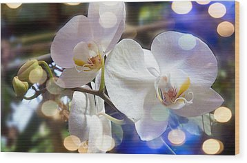 Glorious Orchids Wood Print