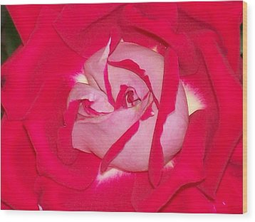 Wood Print featuring the photograph Glorious Red Rose by Belinda Lee