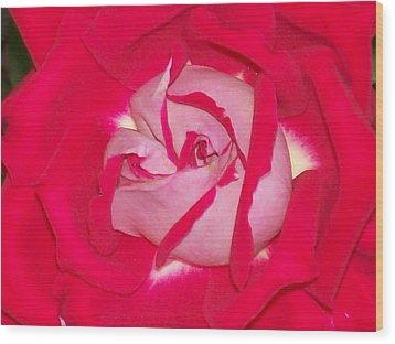 Glorious Red Rose Wood Print by Belinda Lee
