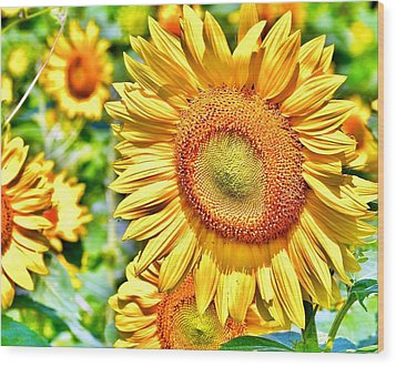 Glorious Sunflowers Wood Print