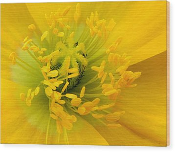 Wood Print featuring the photograph Glory Of Nature by Deb Halloran