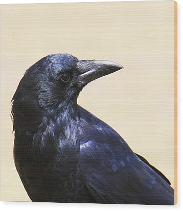 Glossy Crow Wood Print by Bob and Jan Shriner