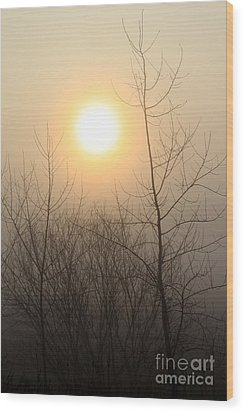 Glow Wood Print by Rick Rauzi